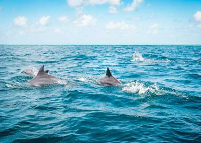 sunset-cruise-cape-town-dolphins